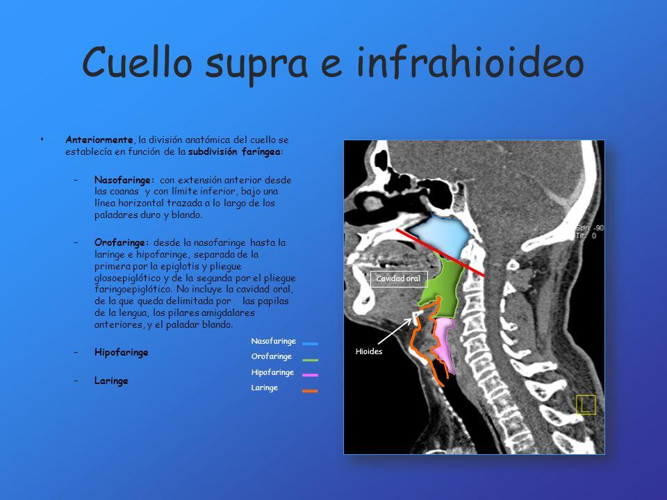 Cuello supra e infrahioideo Anteriormente, la división anatómica del cuello se establecía en función de la subdivisión faríngea: –Nasofaringe: con ext