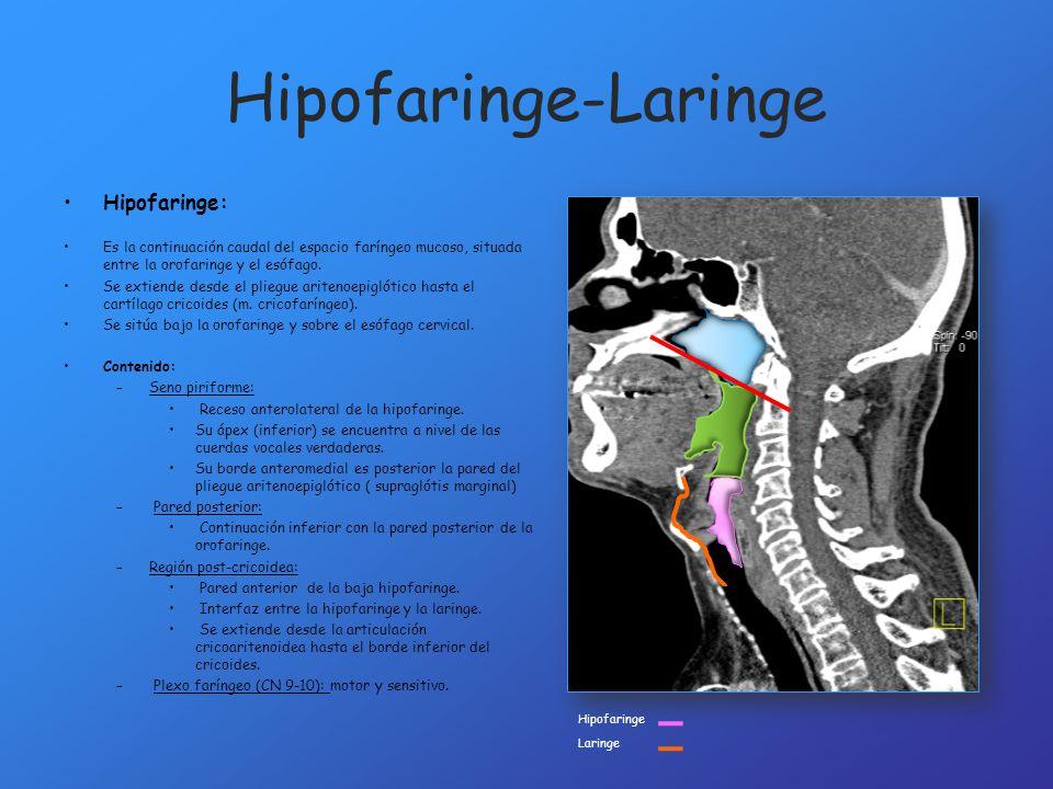 Hipofaringe-Laringe Hipofaringe: Es la continuación caudal del espacio faríngeo mucoso, situada entre la orofaringe y el esófago. Se extiende desde el