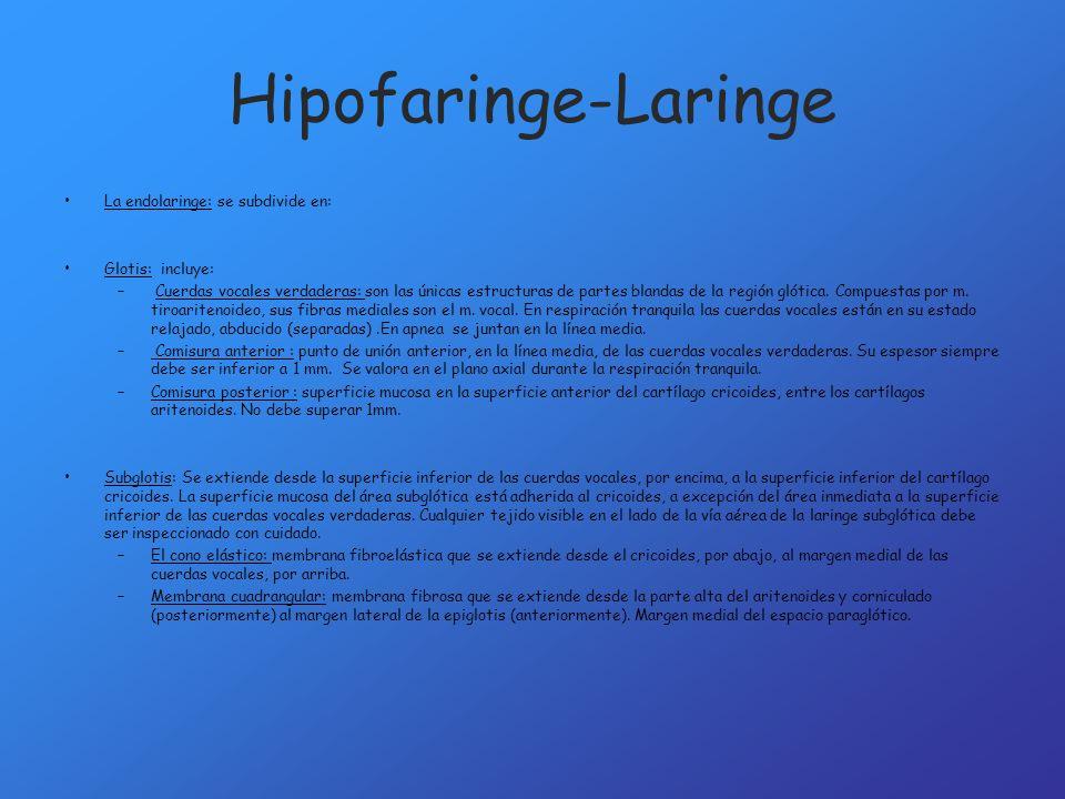 Hipofaringe-Laringe La endolaringe: se subdivide en: Glotis: incluye: – Cuerdas vocales verdaderas: son las únicas estructuras de partes blandas de la