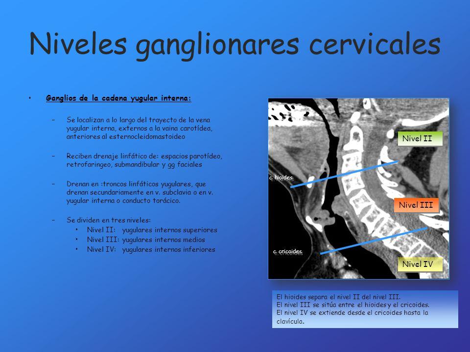 Niveles ganglionares cervicales El hioides separa el nivel II del nivel III. El nivel III se sitúa entre el hioides y el cricoides. El nivel IV se ext