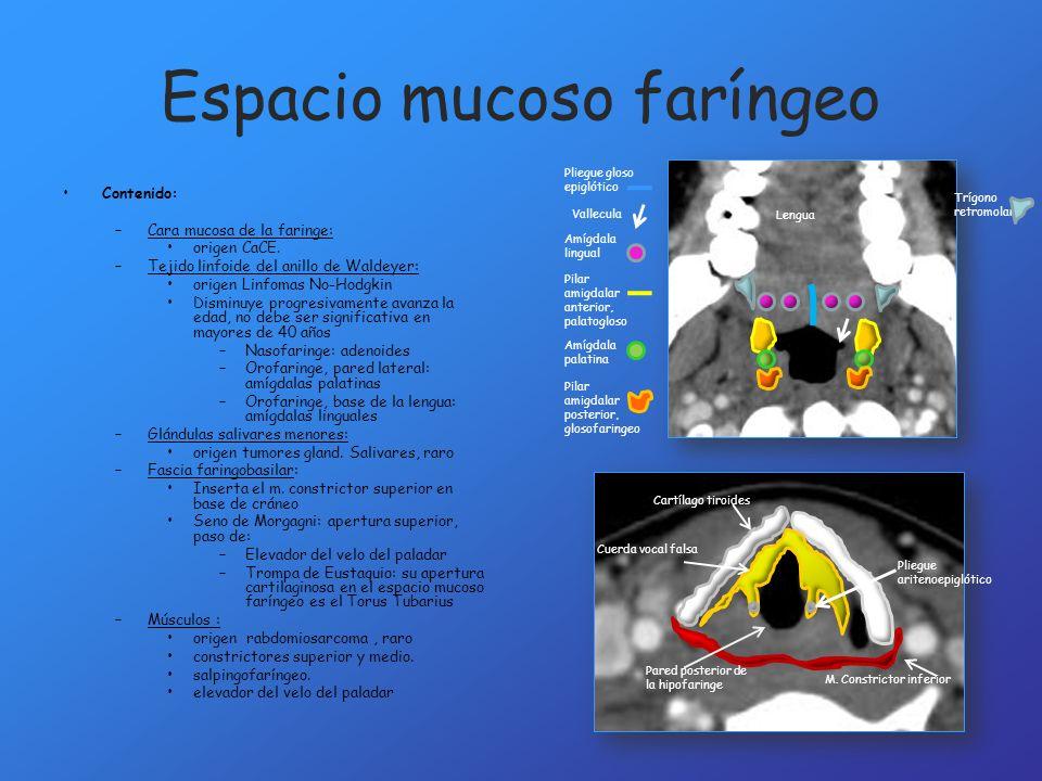 Espacio mucoso faríngeo Contenido: –Cara mucosa de la faringe: origen CaCE. –Tejido linfoide del anillo de Waldeyer: origen Linfomas No-Hodgkin Dismin