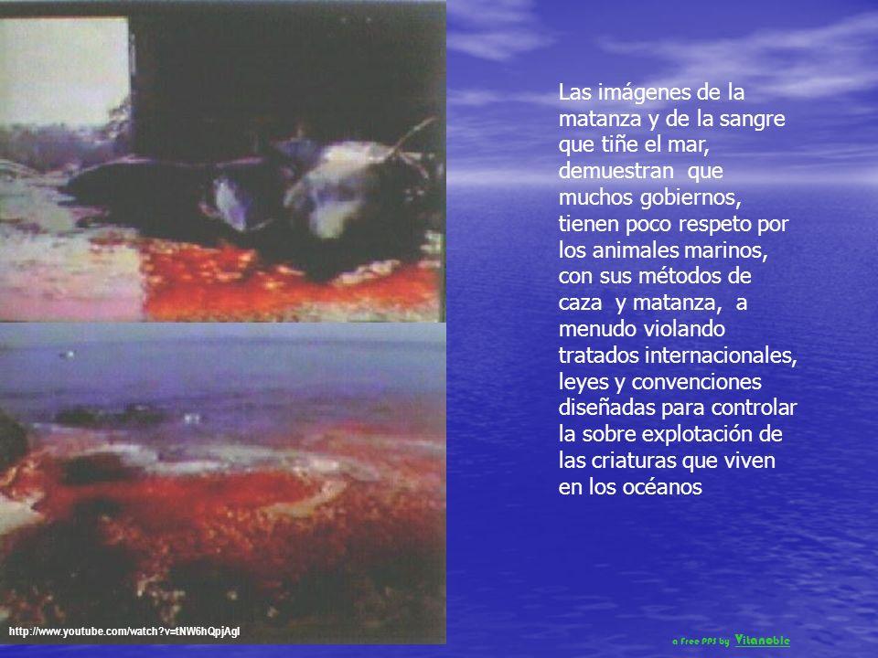 Madres e hijos, quedan aterrados al ser separados y sacados del agua, para ser golpeados hasta la muerte Uno a uno, son transportados o arrastrados co