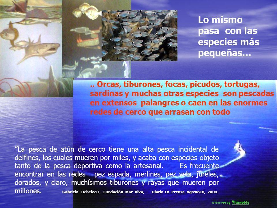 Las imágenes de la matanza y de la sangre que tiñe el mar, demuestran que muchos gobiernos, tienen poco respeto por los animales marinos, con sus métodos de caza y matanza, a menudo violando tratados internacionales, leyes y convenciones diseñadas para controlar la sobre explotación de las criaturas que viven en los océanos http://www.youtube.com/watch v=tNW6hQpjAgI a Free PPS by V it ano ble