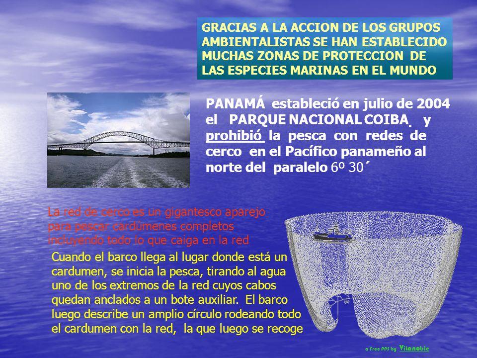 ORGANIZACIONES Y GOBIERNOS RESPONSABLES HAN TOMADO ACCION CONTRA LA DESVASTACIÓN DE LOS OCEÁNOS. Por ejemplo: Desde 1991, Estados Unidos prohibió la i