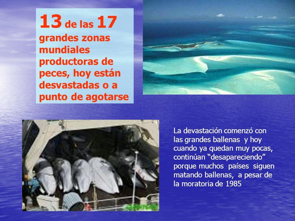 Gigantescas redes de cerco, a lo largo y ancho de los océanos, engullen sin distinción, todo lo que encuentran Estos grandes buques, más que los peque
