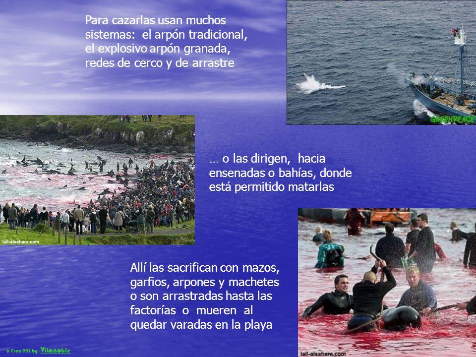 13 de las 17 grandes zonas mundiales productoras de peces, hoy están desvastadas o a punto de agotarse La devastación comenzó con las grandes ballenas y hoy cuando ya quedan muy pocas, continúan desapareciendo porque muchos países siguen matando ballenas, a pesar de la moratoria de 1985