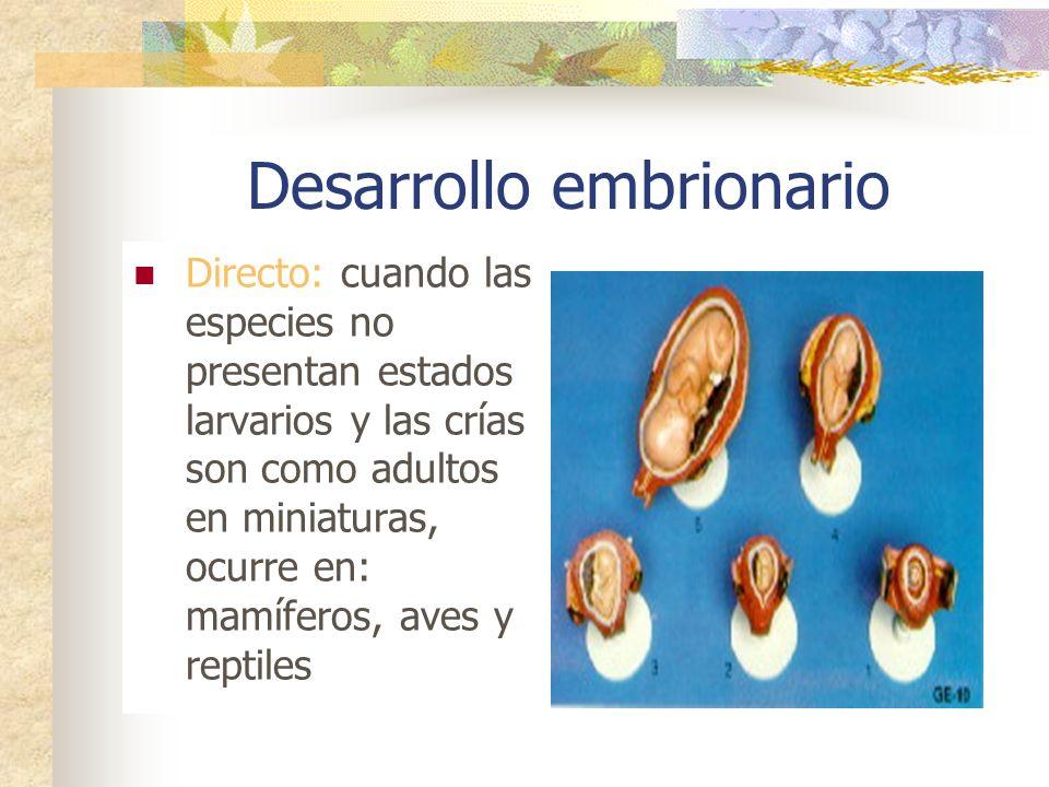Abril 2011 Desarrollo Animal DINACELY ESPINAL OSPINA Ciencias Naturales. Colegio San Ignacio de Loyola Grado Octavo