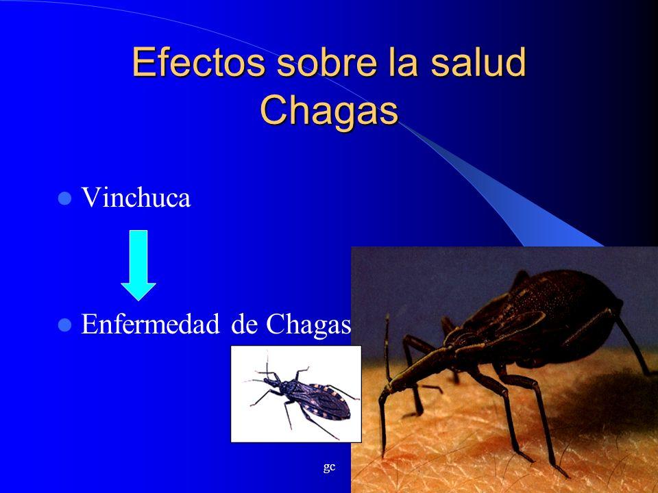 gc Efectos sobre la salud Chagas Vinchuca Enfermedad de Chagas