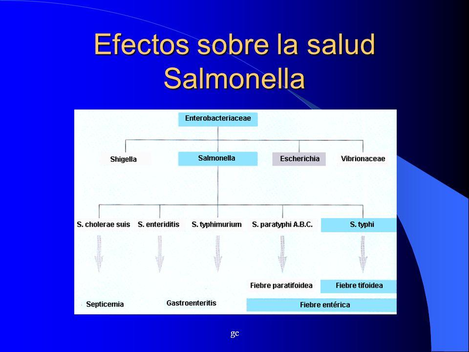gc Efectos sobre la salud Salmonella