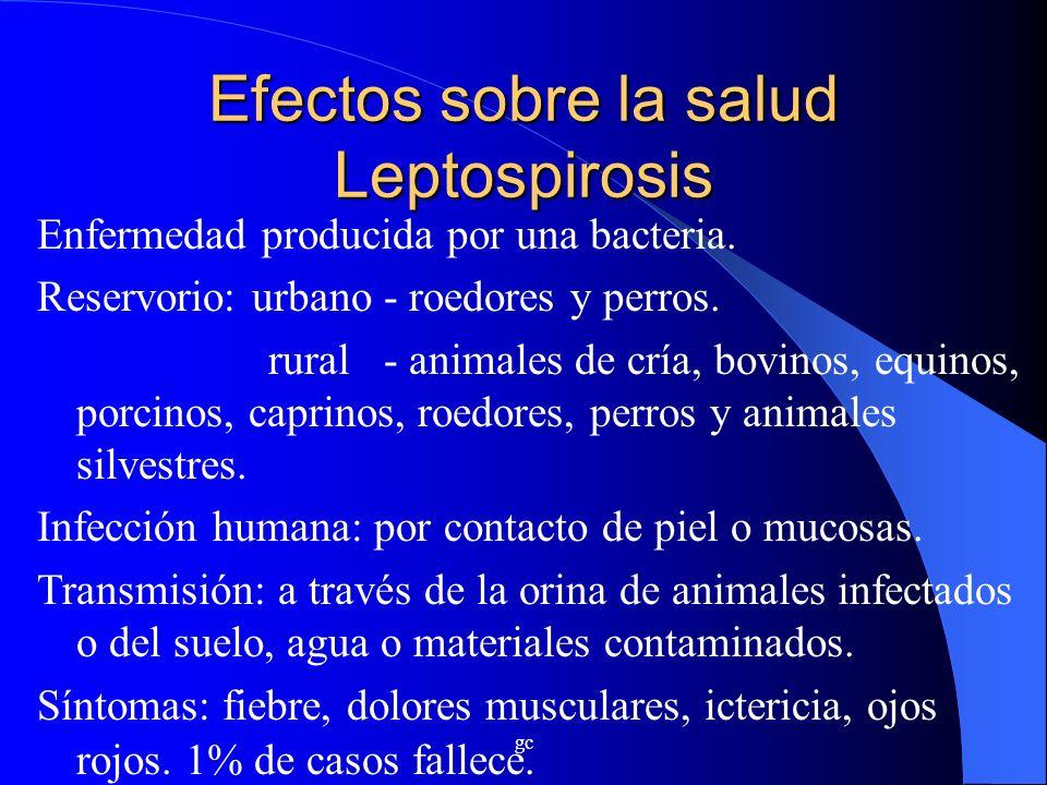 gc Efectos sobre la salud Leptospirosis Enfermedad producida por una bacteria. Reservorio: urbano - roedores y perros. rural - animales de cría, bovin
