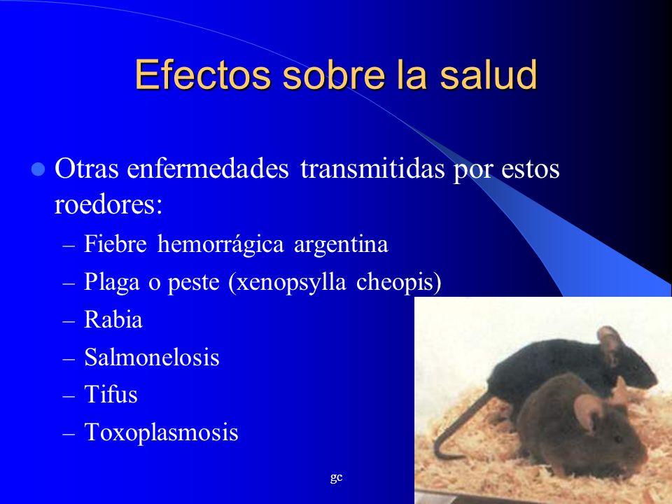 gc Efectos sobre la salud Otras enfermedades transmitidas por estos roedores: – Fiebre hemorrágica argentina – Plaga o peste (xenopsylla cheopis) – Ra