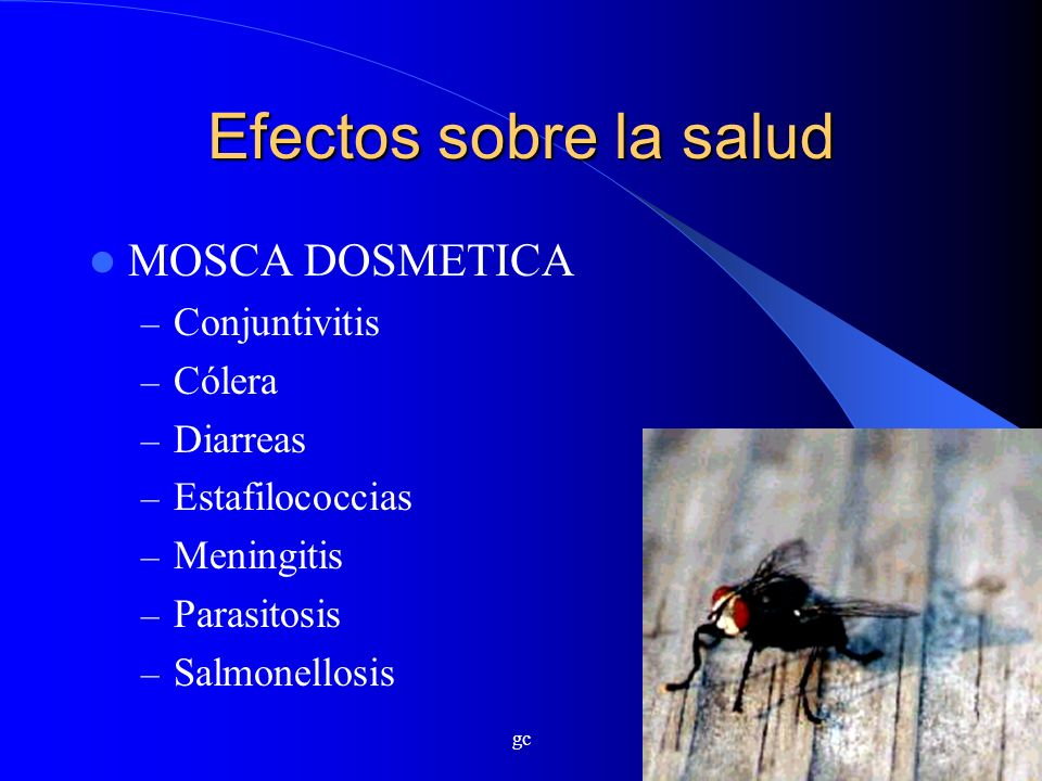 gc Efectos sobre la salud MOSCA DOSMETICA – Conjuntivitis – Cólera – Diarreas – Estafilococcias – Meningitis – Parasitosis – Salmonellosis