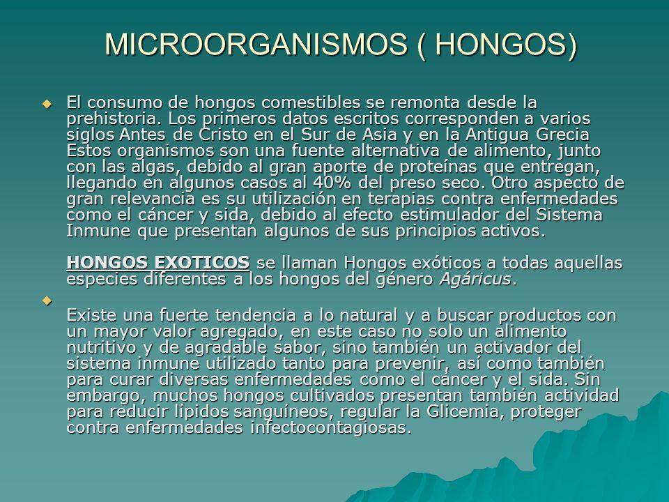 MICROORGANISMOS ( HONGOS) El consumo de hongos comestibles se remonta desde la prehistoria. Los primeros datos escritos corresponden a varios siglos A