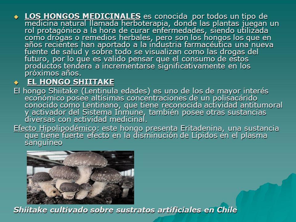 LOS HONGOS MEDICINALES es conocida por todos un tipo de medicina natural llamada herboterapia, donde las plantas juegan un rol protagónico a la hora d