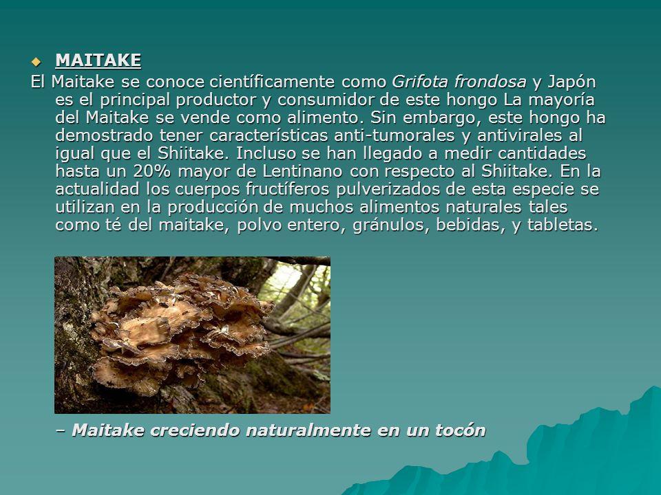 MAITAKE MAITAKE El Maitake se conoce científicamente como Grifota frondosa y Japón es el principal productor y consumidor de este hongo La mayoría del