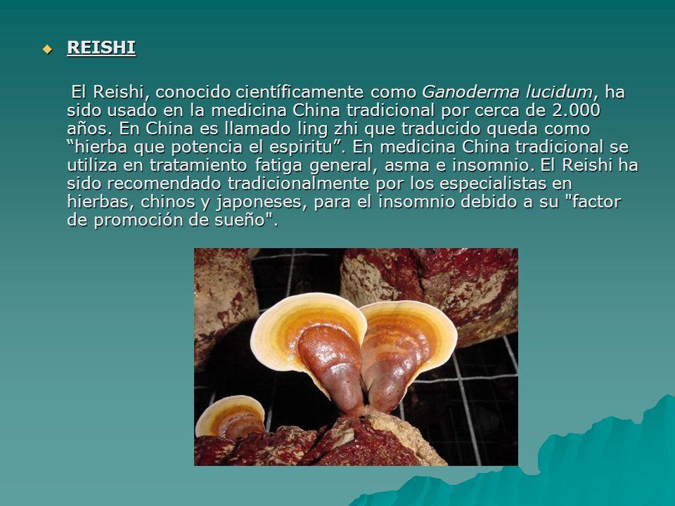 REISHI REISHI El Reishi, conocido científicamente como Ganoderma lucidum, ha sido usado en la medicina China tradicional por cerca de 2.000 años. En C