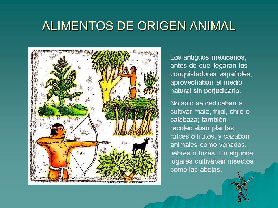 ALIMENTOS DE ORIGEN ANIMAL Los antiguos mexicanos, antes de que llegaran los conquistadores españoles, aprovechaban el medio natural sin perjudicarlo.