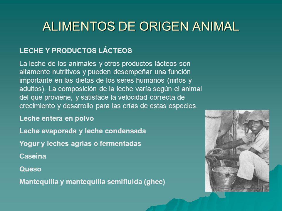 LECHE Y PRODUCTOS LÁCTEOS La leche de los animales y otros productos lácteos son altamente nutritivos y pueden desempeñar una función importante en la