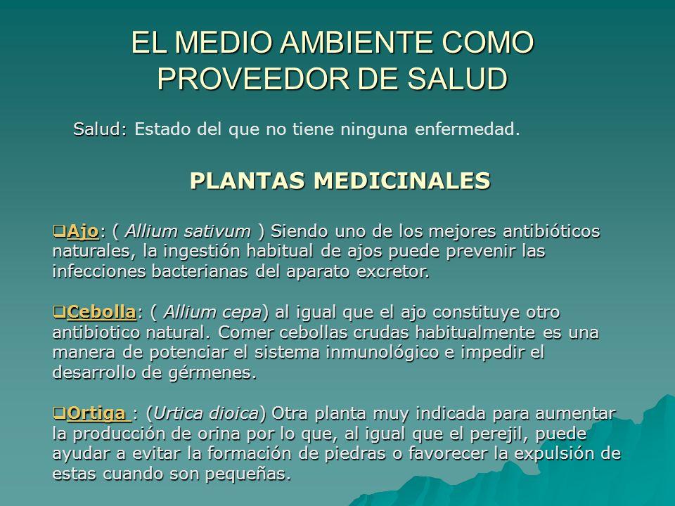 EL MEDIO AMBIENTE COMO PROVEEDOR DE SALUD Salud: Salud: Estado del que no tiene ninguna enfermedad. PLANTAS MEDICINALES Ajo: ( Allium sativum ) Siendo