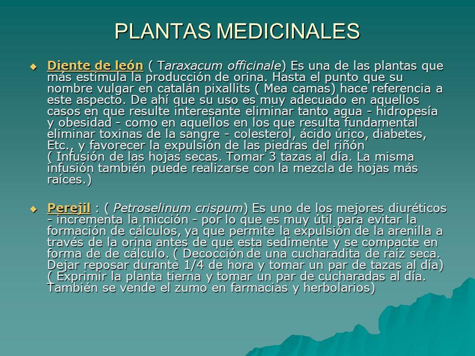 PLANTAS MEDICINALES Diente de león ( Taraxacum officinale) Es una de las plantas que más estimula la producción de orina. Hasta el punto que su nombre