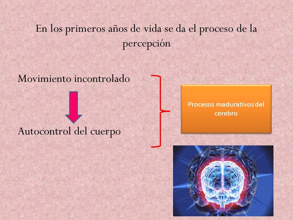 En los primeros años de vida se da el proceso de la percepción Movimiento incontrolado Autocontrol del cuerpo Procesos madurativos del cerebro