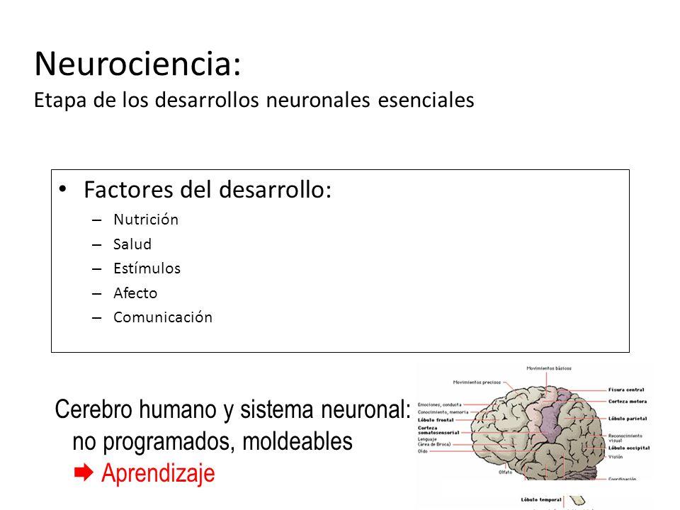 Factores del desarrollo: – Nutrición – Salud – Estímulos – Afecto – Comunicación Cerebro humano y sistema neuronal: no programados, moldeables Aprendi
