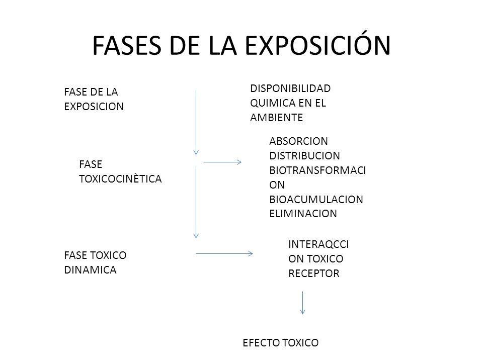 FASES DE LA EXPOSICIÓN FASE DE LA EXPOSICION DISPONIBILIDAD QUIMICA EN EL AMBIENTE FASE TOXICOCINÈTICA ABSORCION DISTRIBUCION BIOTRANSFORMACI ON BIOAC