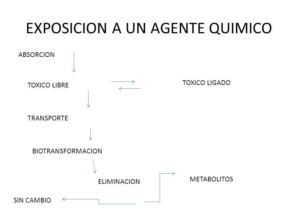 TOXICOCIN ETICA TOXICO VIA DE ENTRADA ABSORCION CIRCULACION TOXICO LIBRE TOXICO UNIDO A PROTEHÌNAS BIOTRANSFORMACION ORGANO BLANCO DEPOSITO EXCRECION