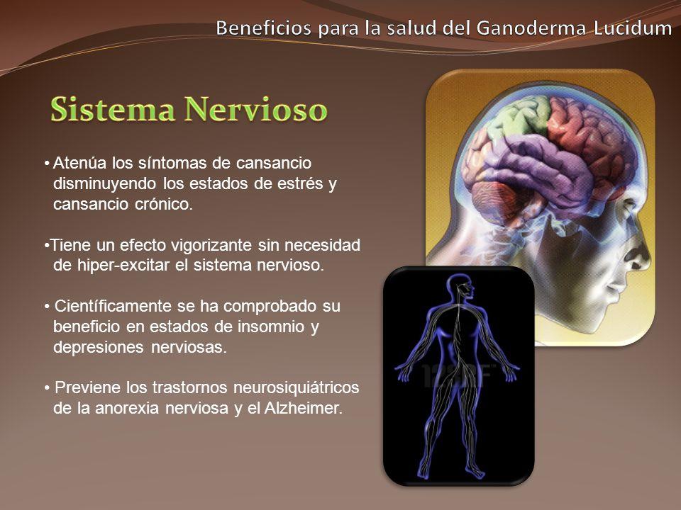 Atenúa los síntomas de cansancio disminuyendo los estados de estrés y cansancio crónico. Tiene un efecto vigorizante sin necesidad de hiper-excitar el