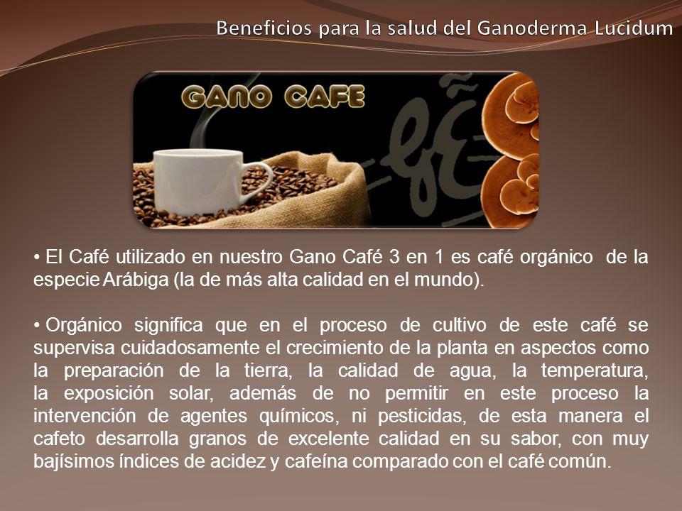 El Café utilizado en nuestro Gano Café 3 en 1 es café orgánico de la especie Arábiga (la de más alta calidad en el mundo). Orgánico significa que en e