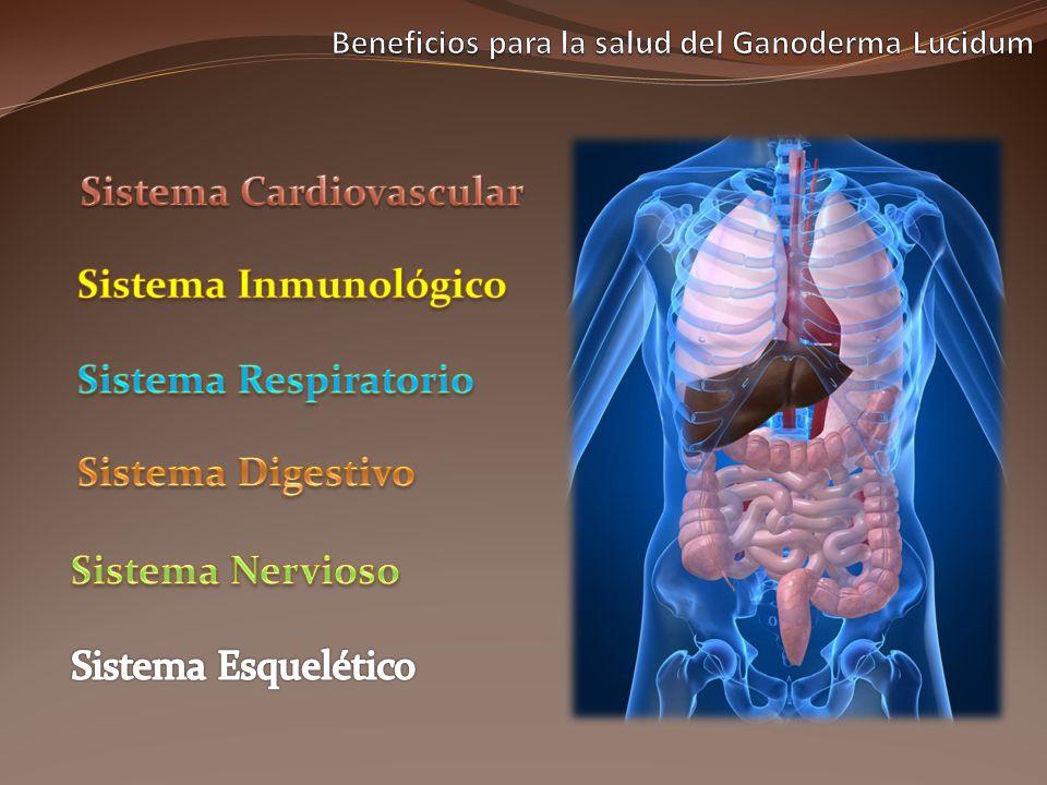 El Germanio Orgánico eleva el nivel de oxigeno en la sangre lo cual ayuda en la óptima oxigenación de todos los tejidos del cuerpo en especial del corazón y cerebro.