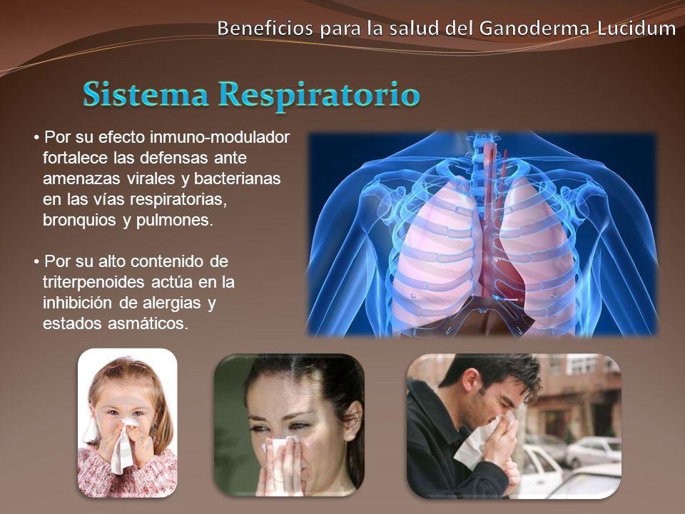 Por su efecto inmuno-modulador fortalece las defensas ante amenazas virales y bacterianas en las vías respiratorias, bronquios y pulmones. Por su alto