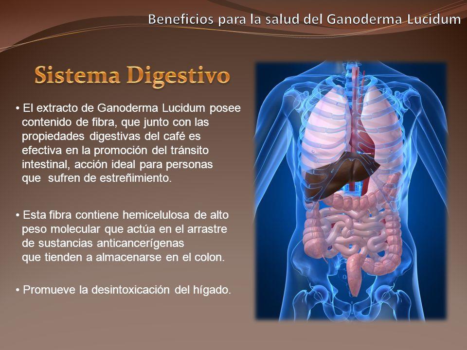El extracto de Ganoderma Lucidum posee contenido de fibra, que junto con las propiedades digestivas del café es efectiva en la promoción del tránsito