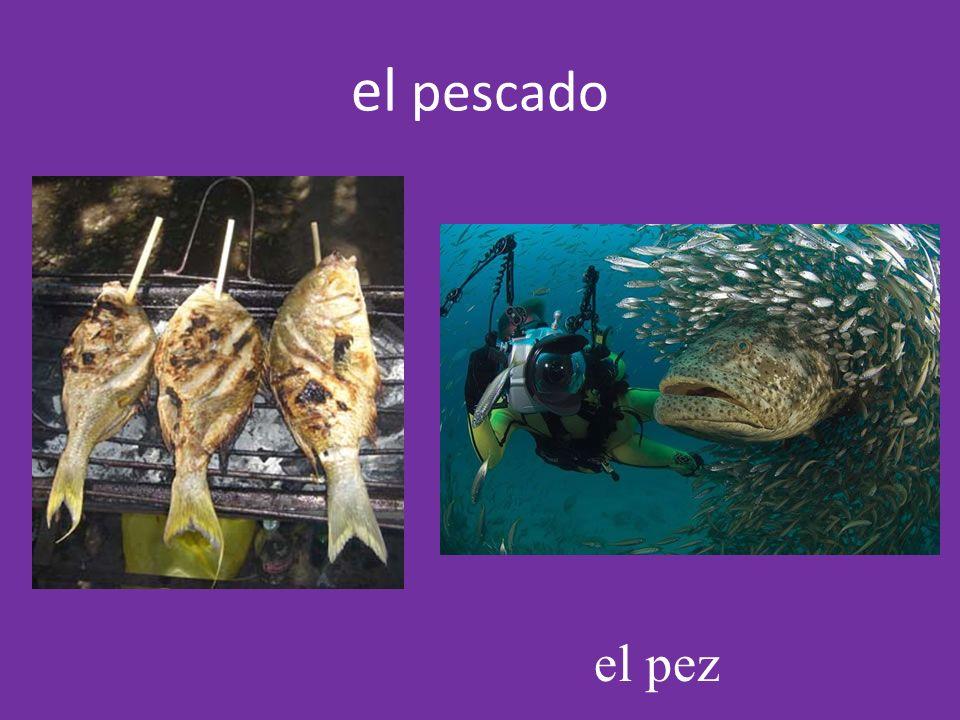 el pez el pescado