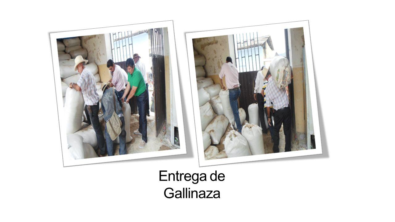 CAFÉ Se realizo el acompañamiento a los caficultores que hacían parte del programa « San Joaquín Tierra de café» y se les hizo la entrega de micorriza