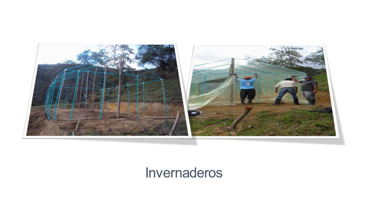 Hortifrutícola Se realizo la construcción de 5 invernaderos en las veredas de San Ignacio, La Aurora y Santa Bárbara, también se hizo la entrega de se