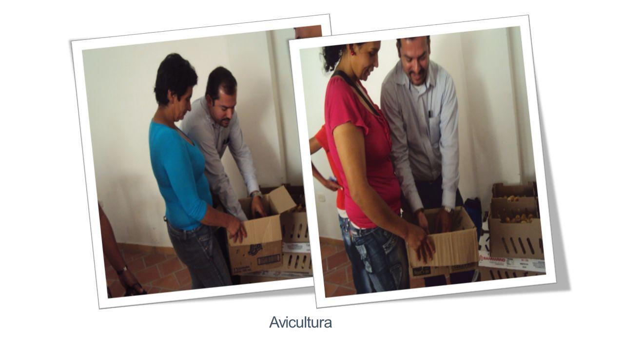 Avicultura Se hizo la entrega de 350 pollas ponedoras de cuatro días de nacida a las familias pertenecientes a la Red Unidos; cada familia recibió de a 7 pollas y 800 gramos de concentrado.