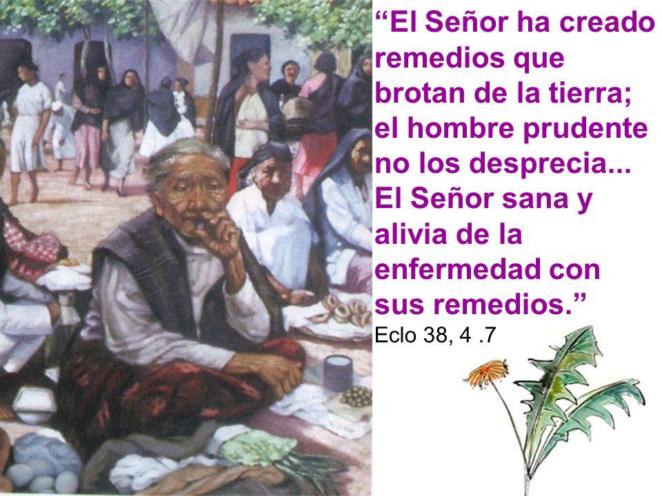 El Señor ha creado remedios que brotan de la tierra; el hombre prudente no los desprecia... El Señor sana y alivia de la enfermedad con sus remedios.