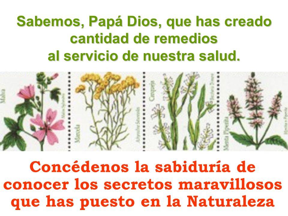 Sabemos, Papá Dios, que has creado cantidad de remedios al servicio de nuestra salud. Concédenos la sabiduría de conocer los secretos maravillosos que