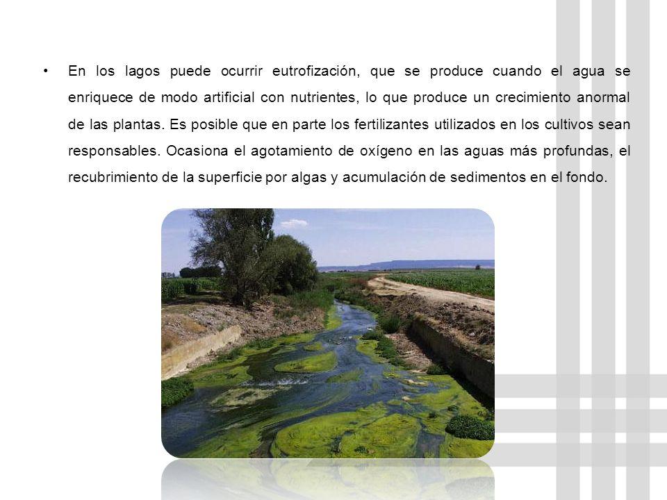 LA EUTROFIZACIÓN PUEDE PROVOCAR: Problemas estéticos Agua con mal sabor Mal olor en el agua Una acumulación de algas o un crecimiento exagerado de plantas con raíces.