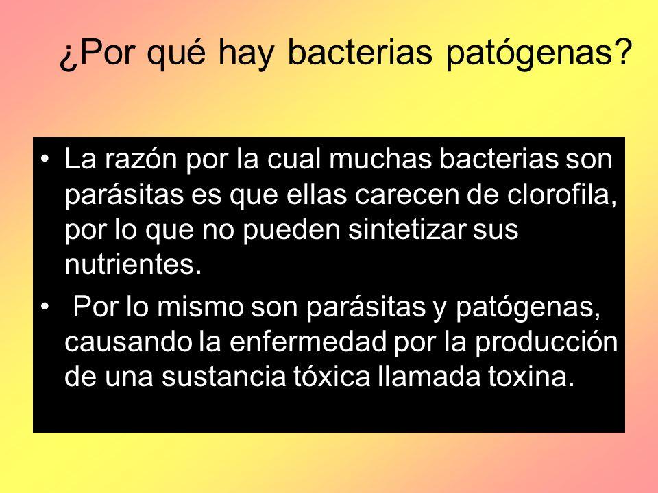 ¿Por qué hay bacterias patógenas? La razón por la cual muchas bacterias son parásitas es que ellas carecen de clorofila, por lo que no pueden sintetiz