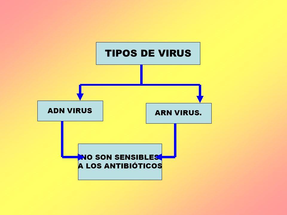 TIPOS DE VIRUS ADN VIRUS ARN VIRUS. NO SON SENSIBLES A LOS ANTIBIÓTICOS