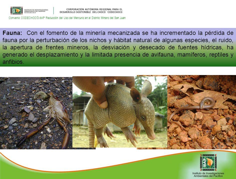 CORPORACIÓN AUTÓNOMA REGIONAL PARA EL DESARROLLO SOSTENIBLE DEL CHOCÓ ¨CODECHOCO Convenio CODECHOCÓ-IIAP Reducción del Uso del Mercurio en el Distrito Minero del San Juan Fauna: Con el fomento de la minería mecanizada se ha incrementado la pérdida de fauna por la perturbación de los nichos y hábitat natural de algunas especies, el ruido, la apertura de frentes mineros, la desviación y desecado de fuentes hídricas, ha generado el desplazamiento y la limitada presencia de avifauna, mamíferos, reptiles y anfibios.