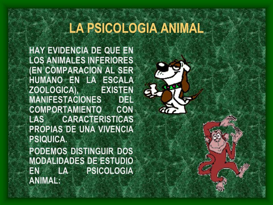 LA PSICOLOGIA ANIMAL HAY EVIDENCIA DE QUE EN LOS ANIMALES INFERIORES (EN COMPARACION AL SER HUMANO EN LA ESCALA ZOOLOGICA), EXISTEN MANIFESTACIONES DE