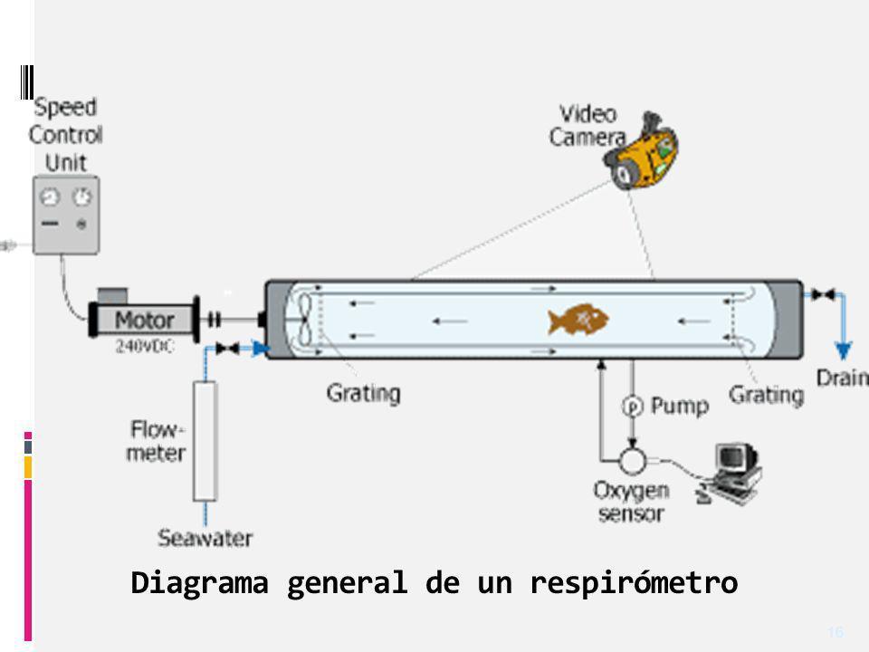 Diagrama general de un respirómetro 16
