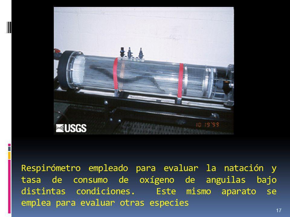 Respirómetro empleado para evaluar la natación y tasa de consumo de oxígeno de anguilas bajo distintas condiciones. Este mismo aparato se emplea para