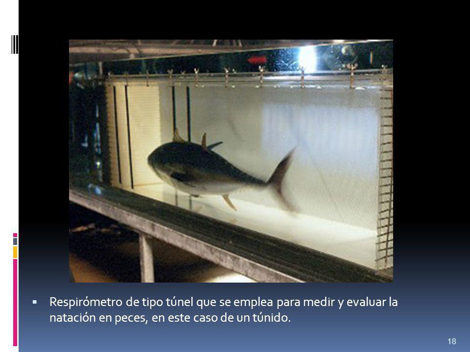 Respirómetro de tipo túnel que se emplea para medir y evaluar la natación en peces, en este caso de un túnido. 18