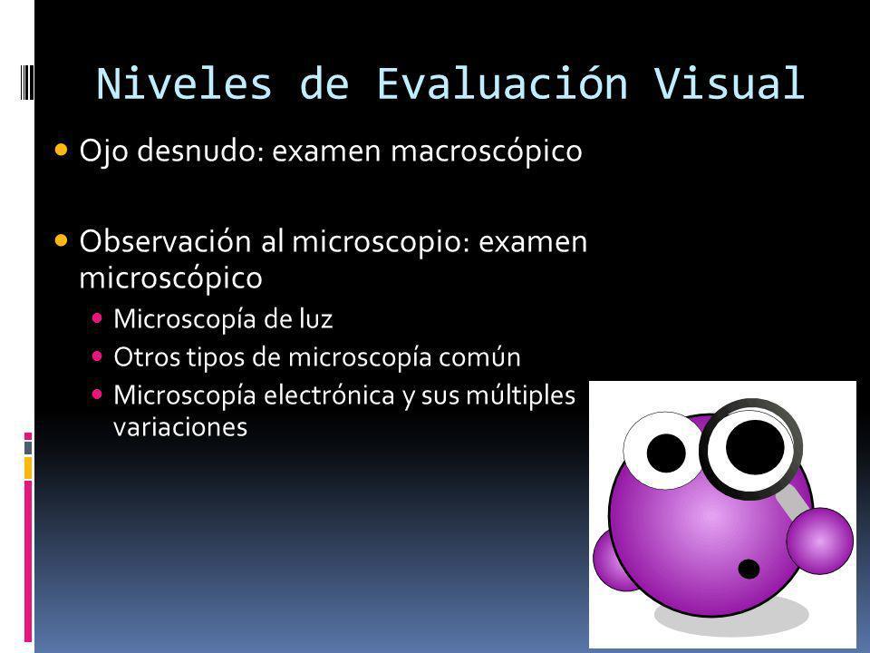 Niveles de Evaluación Visual Ojo desnudo: examen macroscópico Observación al microscopio: examen microscópico Microscopía de luz Otros tipos de micros