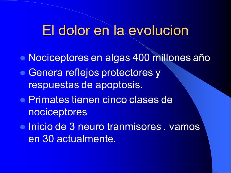 El dolor en la evolucion Nociceptores en algas 400 millones año Genera reflejos protectores y respuestas de apoptosis.