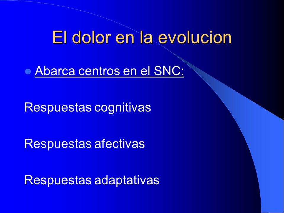 El dolor en la evolucion Abarca centros en el SNC: Respuestas cognitivas Respuestas afectivas Respuestas adaptativas